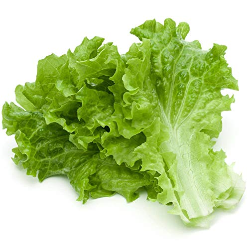 1000Pcs Lettuce Seeds Green Vegetables Unique Leaf Shapes Cultivated Garden Throughout The Year Green Salad Seeds for Gardening Vegetable