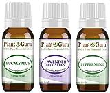 Essential Oil Set Beginner Trio Kit 10 ml 100% Pure Therapeutic Grade Includes: Eucalyptus,...
