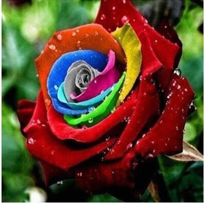 jardinières Pots de fleurs, 20 sortes de 100 graines, Rainbow Rose graines belle rose graines bonsaïs graines pour la maison et le jardin 1