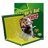 ZWSM Trampas De Pegamento para Ratones, Tablero De Pegamento para Ratas, Paquete De 5 Trampas De Pegamento para Ratas Extragrandes, Uso Interiores Y Exteriores