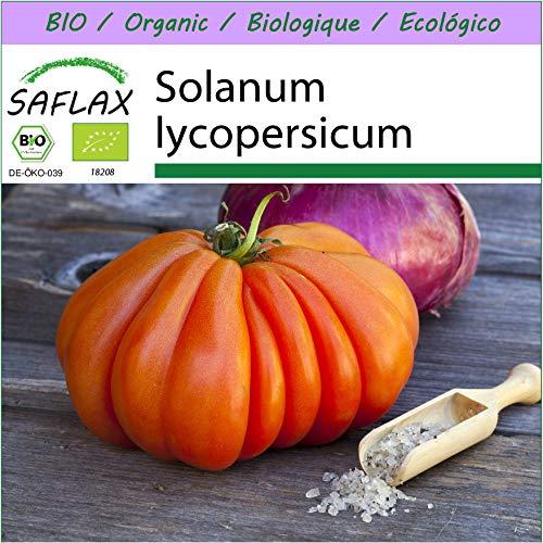 SAFLAX - BIO - Tomate - Ochsenherz - 10 Samen - Solanum lycopersicum