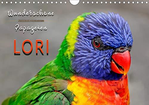Wunderschöne Papageien - Lori (Wandkalender 2021 DIN A4 quer)