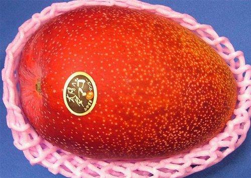 【予約受付商品】超特大 太陽のタマゴ 完熟マンゴー 【赤秀】 1玉入り およそ700g 化粧箱入り。