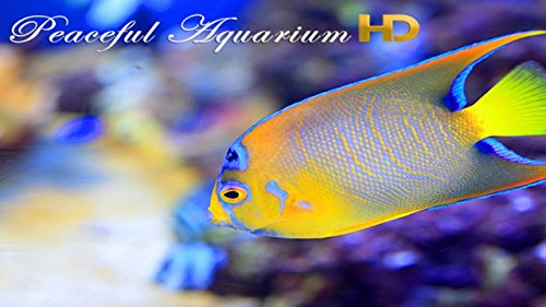 『Peaceful Aquarium HD』の9枚目の画像