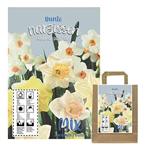 Buntes Set aus 50 Narzissen Zwiebeln in Geschenkverpackung - Frühjahrsblüher, winterharte Knollen - blühen in verschiedenen Farben(50 Narzissen Zwiebeln)