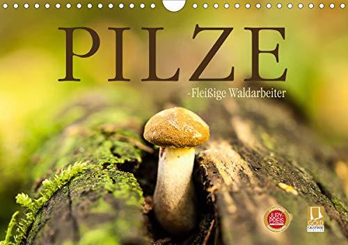 Pilze - fleißige Waldarbeiter (Wandkalender 2021 DIN A4 quer)