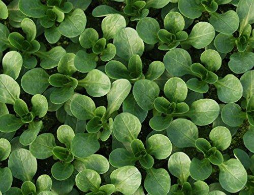 Justseed – Bio – Légumes – Graines de mâche vit – 500