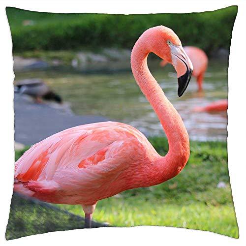 LESGAULEST Throw Pillow Cover (16x16 inch) - Flamingo San Diego Zoo Bird Tropical California
