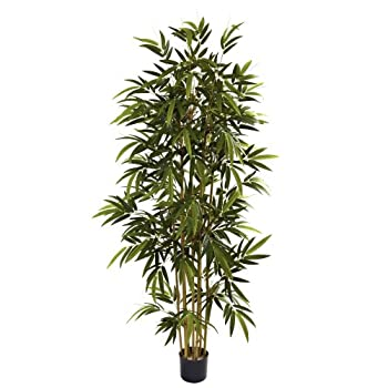 Best bamboo palm tree Reviews