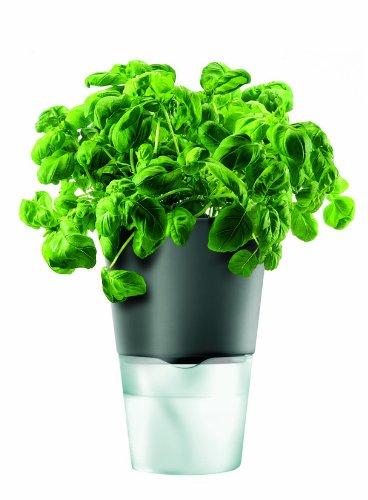 Eva Solo Pot à herbes Gris foncé 13 cm (Import Grande Bretagne)
