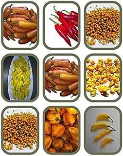 """Fruchtiges Chili Sortiment 6 Sorten von Mild bis Scharf -Alle seltene Fruchtchili""""s"""