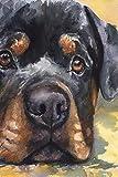 Pintura DIY para adultos Rottweiler negro mascota perro animal pintura por número kit en lienzo para principiantes