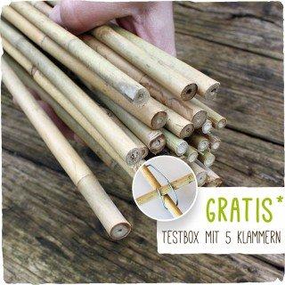 100 Bambusstäbe - Tonkinstäbe 120 cm/10-12 mm + Zubehör zum Testen