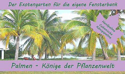 SAFLAX - Anzuchtset - Palmen - Könige der Pflanzenwelt - Mit 2 Samensorten, Gewächshaus, Anzuchtsubstrat, Zellfasertöpfen zum Umtopfen und Anleitung
