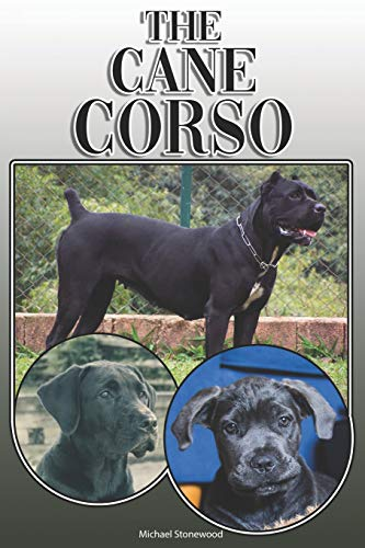 The Cane Corso: A Complete and Comprehensive Owners Guide to: Buying, Owning, Health, Grooming, Training, Obedience, Understanding and Caring for Your Cane Corso