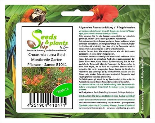 Stk - 5x Crocosmia aurea Gold-Montbretie Garten Pflanzen - Samen B1041 - Seeds Plants Shop Samenbank Pfullingen Patrik Ipsa