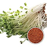 BIO Gartenkresse 1 kg Keimsaat Kresse - frische Saat - Kressesamen für die Sprossenzucht Mikrogrün Superfood Keimsprossen Kresse-Samen Kressesaat 1000 g Gartenkresse