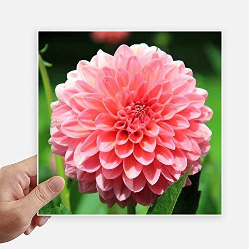 DIYthinker Peach Blossom Beautiful Flowers Autocollant carré de 20 cm Mur Valise pour Ordinateur Portable Motobike Decal 4Pcs 20cm x 20cm Multicolor