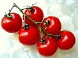 CAMPARI TOMATO, sweet vine tomatoes exotic fruit vegetables plant seed -25 SEEDS
