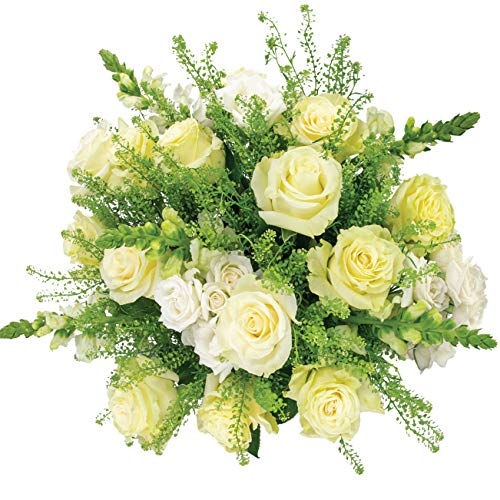 Country Living Floral Collection by Colour Republic Premium Fresh Cut Rose Bouquet, 24 Stems, White