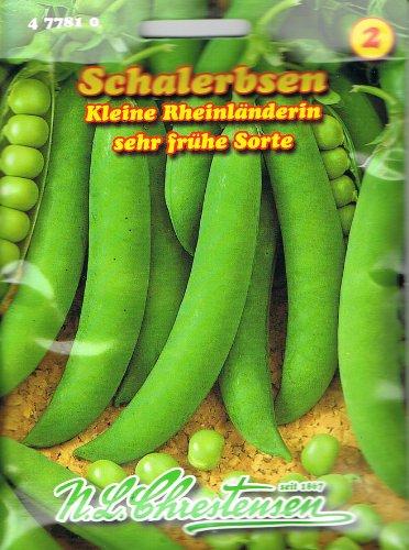 Schalerbsen 'Kleine Rheinländerin' sehr frühe Sorte, 50 cm hoch