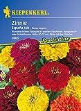Kiepenkerl, Zinnien, Zinnia elegans Espana Mix