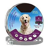Greyghost Mascota Collar de aceites Esenciales Naturales, Perros Seguros Gatos Control de plagas Pulga Lick Tratamiento Prevención