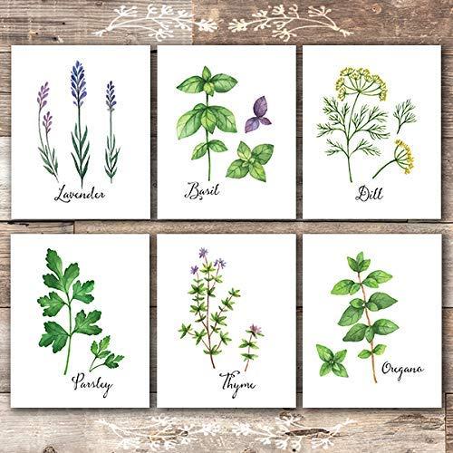Botanical Prints Kitchen Herbs Wall Art - (Set of 6) - Unframed - 8x10s
