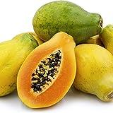 Sunrise Solo Hawaiian Papaya Seeds (Carica Papaya) 5+ Non-GMO Fruit Tree Seeds...