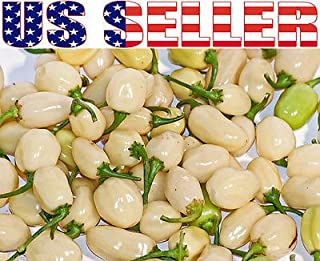 30+ ORGANICALLY GROWN Peruvian White Habanero Hot Pepper Seeds Heirloom NON-GMO