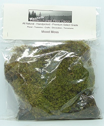 Oregon Coast Forest Mood Moss 112 cubic inch Poly Bag