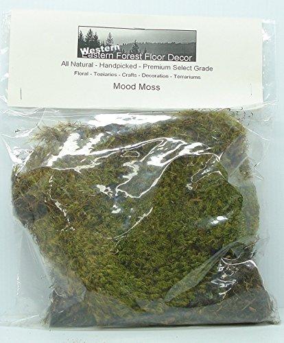 Oregon Coast Forest Mood Moss 112 Cubic inch Poly Bag