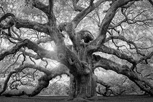 Angel Oak Tree Monochrome Charleston South Carolina Black White Nature Photo Cool Wall Decor Art Print Poster 24x36