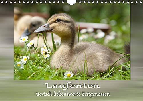 Laufenten - tierisch liebenswerte Zeitgenossen (Wandkalender 2021 DIN A4 quer)