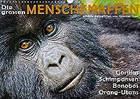 DIE GROSSEN MENSCHENAFFEN (Wandkalender 2022 DIN A3 quer): Gorillas, Schimpansen, Bonobos und Orang-Utans in ihren natuerlichen Lebensraeumen. (Monatskalender, 14 Seiten )
