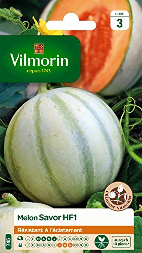 Vilmorin 3664743 Pack de Graines Melon Savor HF1 Création