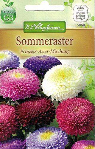 Chrestensen Sommeraster 'Prinzess-Aster-Mischung'