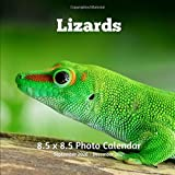 Lizards 8.5 X 8.5 Photo Calendar September 2020 -December 2021: Monthly Calendar with U.S./UK/ Canadian/Christian/Jewish/Muslim Holidays- Nature Liazard Reptiles
