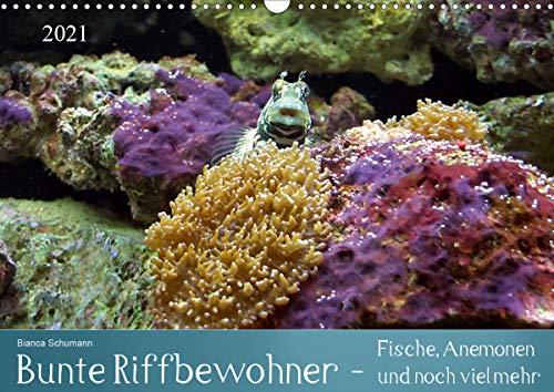 Bunte Riffbewohner - Fische, Anemonen und noch viel mehr (Wandkalender 2021 DIN A3 quer)