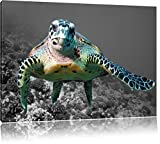 große Schildkröte über Korallenriff schwarz/weiß