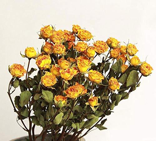 TooGet Natürliche Rosen Getrocknete Blumen Rosenstrauß Bündel, Trockene Blumenstrauß DIY Handwerk Geschenk Arrangements Und Dekoration Für Schreibtisch, Wohnzimmer, Café, Hochzeit (Gelb)
