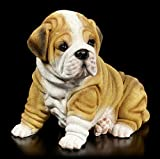 Figuren Shop Gmbh Figura de Jardín - Arrugado Shar Pei Cachorro Figura de Perro, Pintado a Mano Resistente a la Intemperie