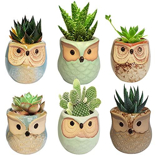 Title Vaso da Fiori, 2.5' Mini Vaso per Pianta Grassa Vaso, Vaso di Gufo per Pianta Succulente Soggiorno Decorazione da Casa Tavolo Scrivania , Ceramica (6 Pezzi )