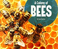 A Colony of Bees (Animal Groups)