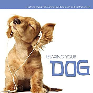 Relaxing Your Dog