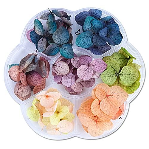 WZHrb Nail Art Getrocknete Blumen, natürliche trockene Blüten für Harzmelahmen Nageldekoration Maniküre-Zubehör (Color : B)