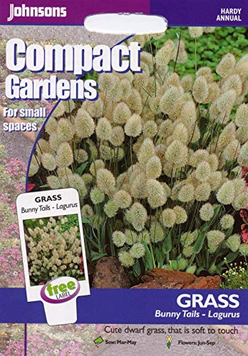 Portal Cool Johnsons Seeds - Paquet Pictorial - Fleur - Herbe Lapin Tails - 150 graines