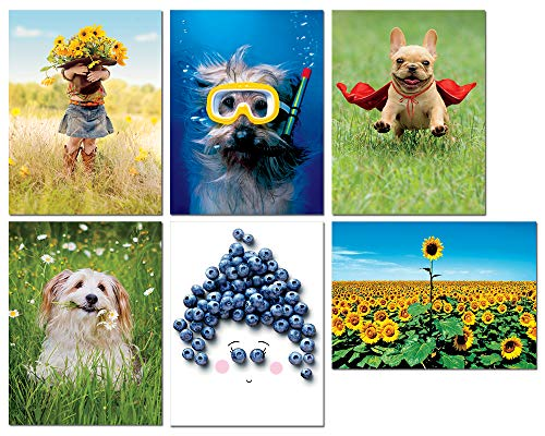 Avanti Press Thank You Greeting Card Variety Pack, 6-Count (32089)