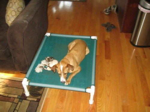 Dianes K9 Creations Inc. Medium Dog Bed, Portable Dog Bed, Raised Bed, Dog Bed Cot, Indoor Outdoor Bed Color Green Mesh Cot Size 28'x40'x8