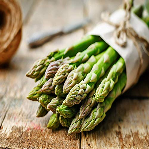 Green Asparagus Plants/Roots 10 Extra Large 2nd Year Best
